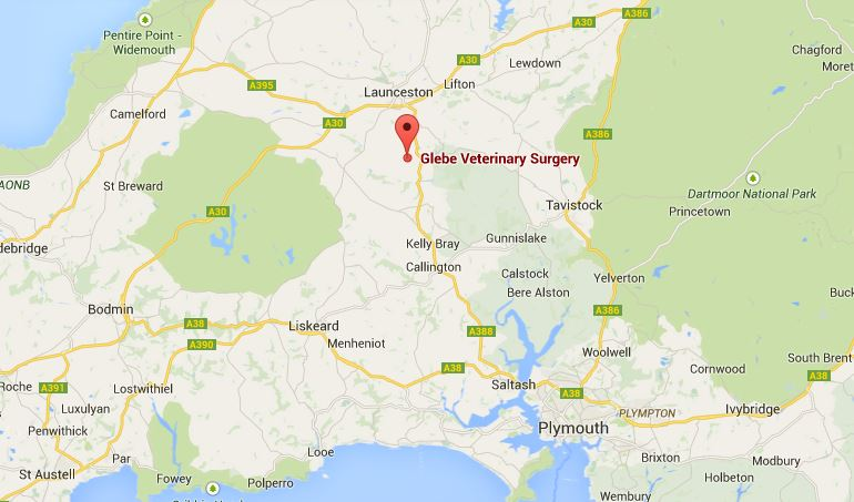 Glebe Veterinary Surgery
