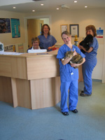Glebe Veterinary Surgery Contact