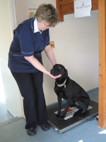 Glebe Vets New clients